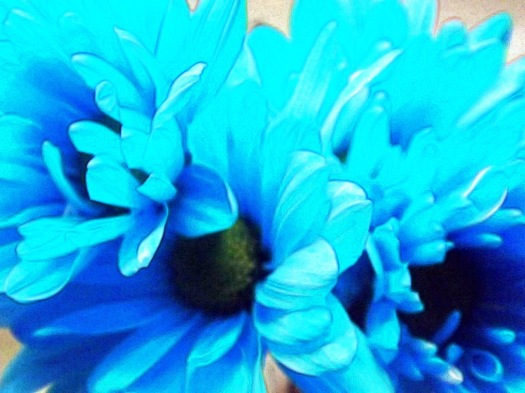 Carnations Blue...