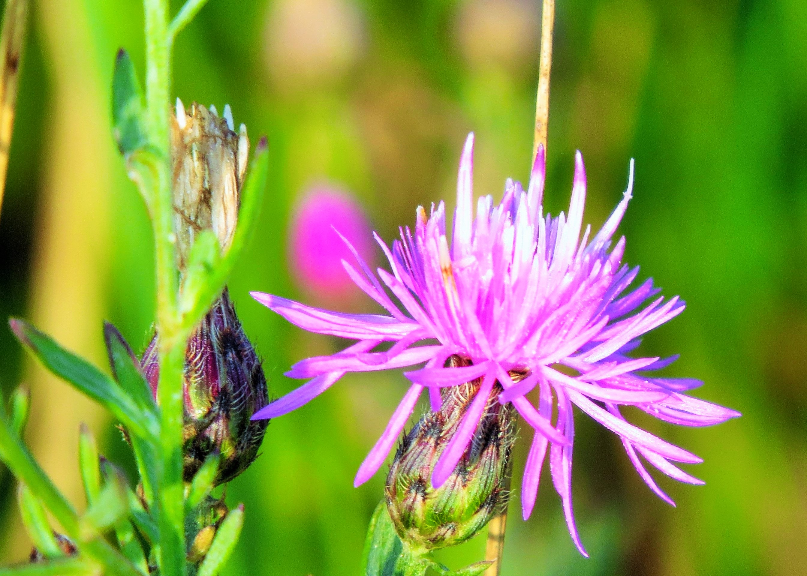 lavender whisps...